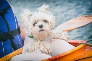 二つのマリオットホテルで愛犬との宿泊が新たに可能に 期間限定