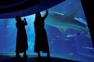 「シェラトン都ホテル大阪」と「海遊館」が特別コラボレーション 特別プランやアフタヌーンティーを販売