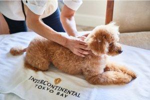 ホテル インターコンチネンタル 東京ベイ、愛犬のリフレクソロジー付きプラン販売