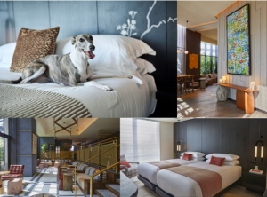 キンプトン新宿東京、ペットも泊まれるワーケーション・30連泊プラン販売