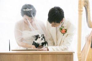 「ハイアット リージェンシー 大阪」、愛犬との宿泊が可能に